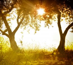 en flot solnedgang blandt to træer